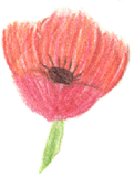 Pastel drawing of a pink poppy